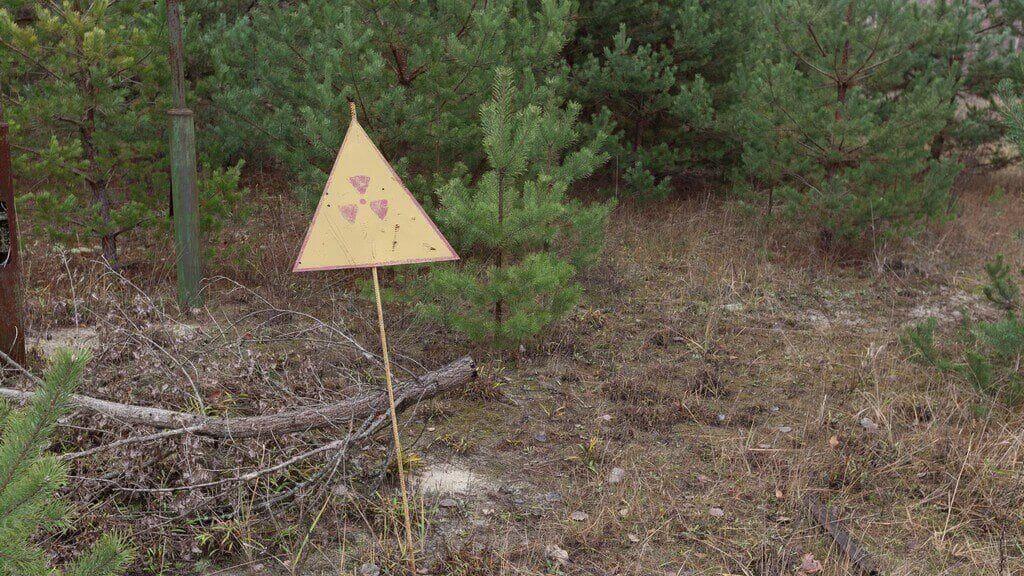 """Las o najsmutniejszym losie lub """"czerwony las"""""""
