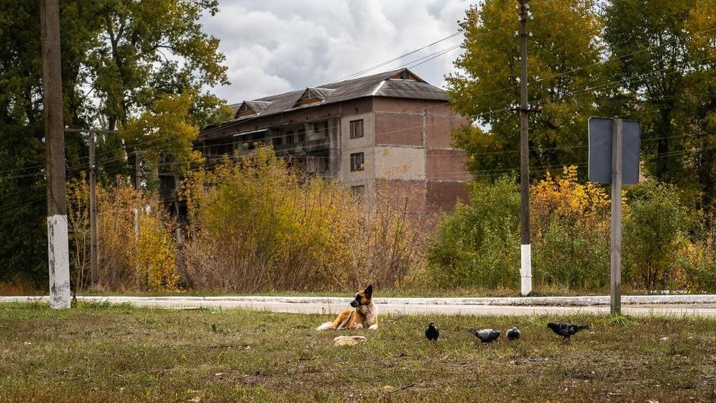 Jak dzikie konie Przewalskiego pojawiły się w strefie wykluczenia w Czarnobylu
