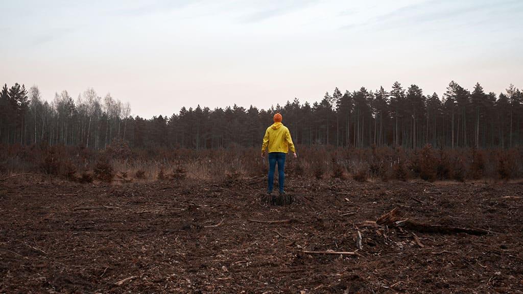 Strefa Czarnobylska stała się kolejną unikalną rezerwą Ukrainy?